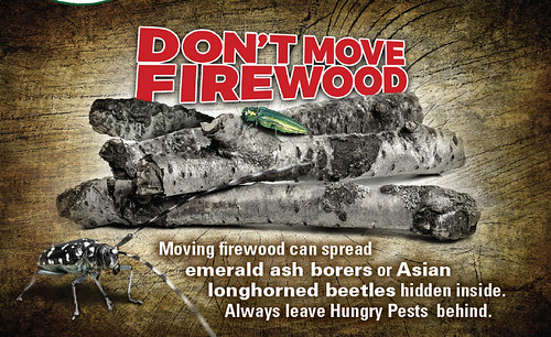 Don't Move Firewood pests graphic