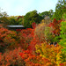 東福寺の紅葉 (Autumn Leaves at Tofuku-ji)