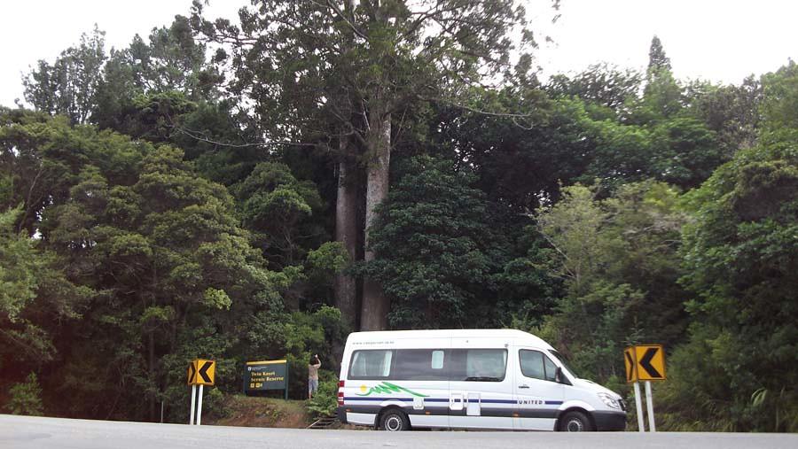 Twin Kauri
