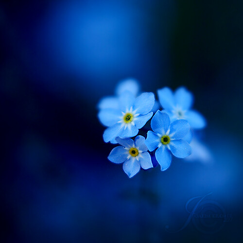 Blue love   Addicted to this s...