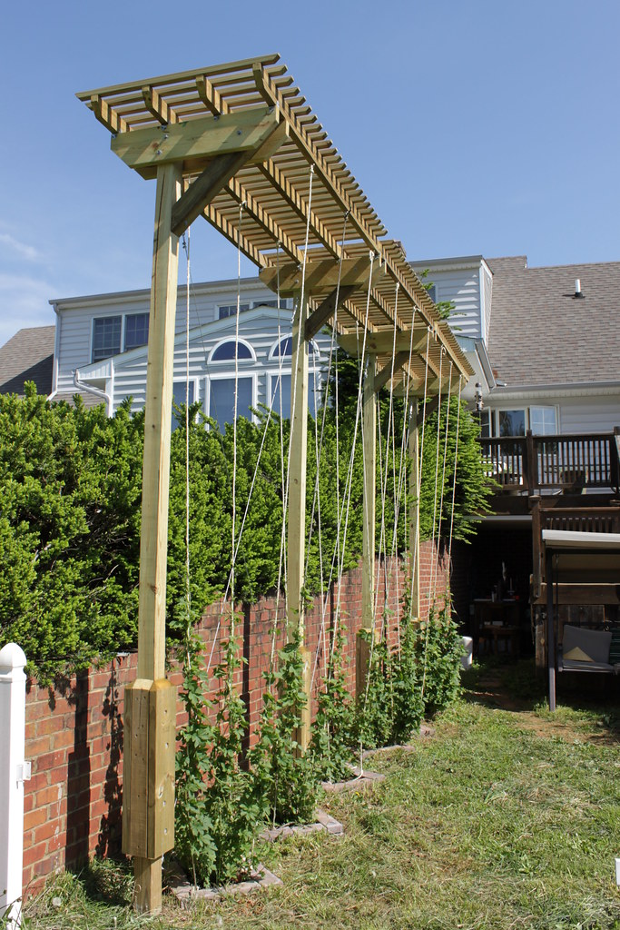 Hop Arbor The Bines Are Strung Up I Put Up Three