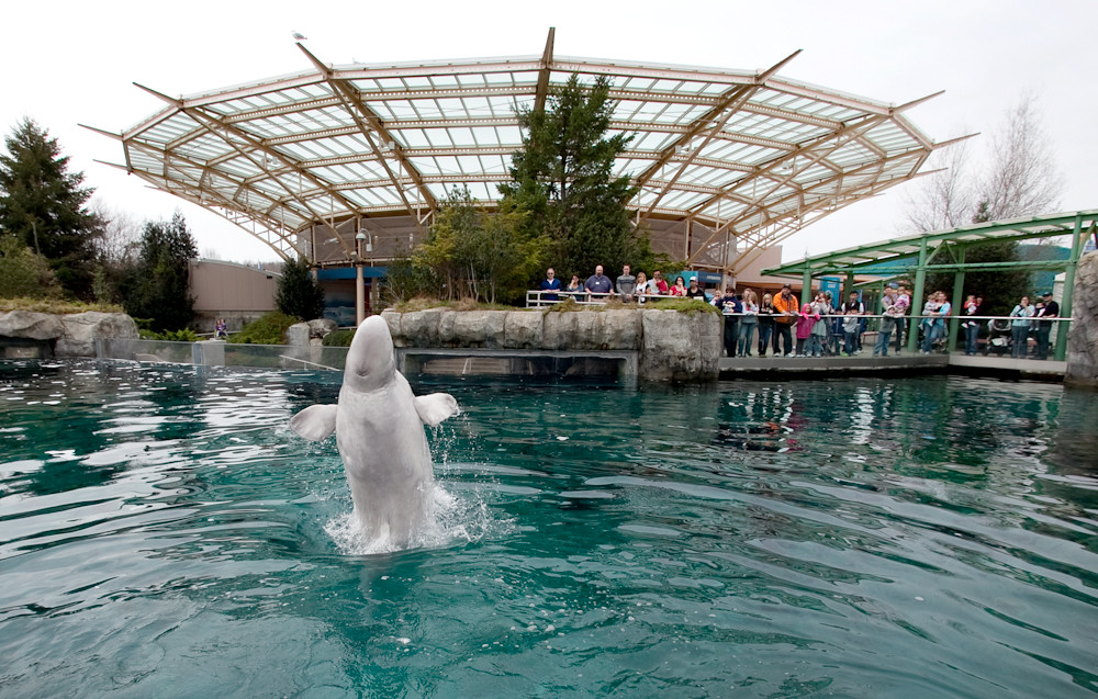 ... Middleton @ Mystic Aquarium WNPR - Connecticut Public Radio Flickr