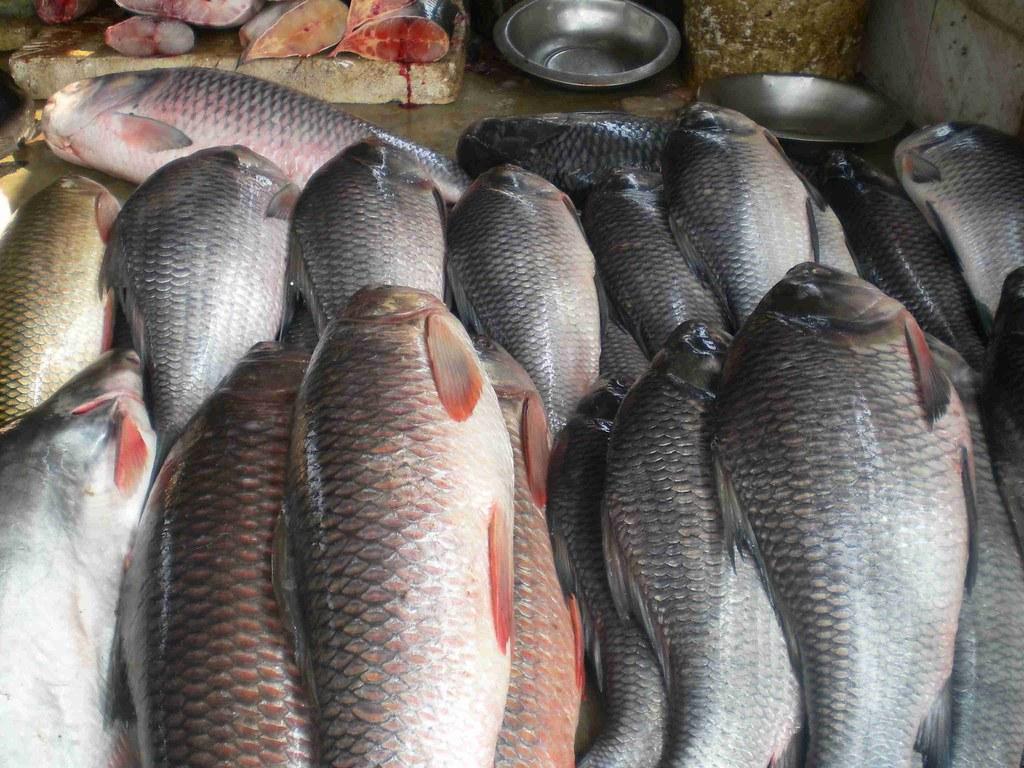 Fish market in bangalore dating 10