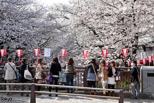 Cherry Blossom Girls - Spring 2011 Edition | by tokyofashion