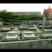 Dutch cemetery Pazhaverkadu - Dusk