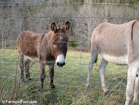 The Daily Donkey 130 - Big (Little) Daddy Donkey Doodle Dandy | by Farmgirl Susan