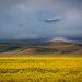 Carrizo Plain Morning