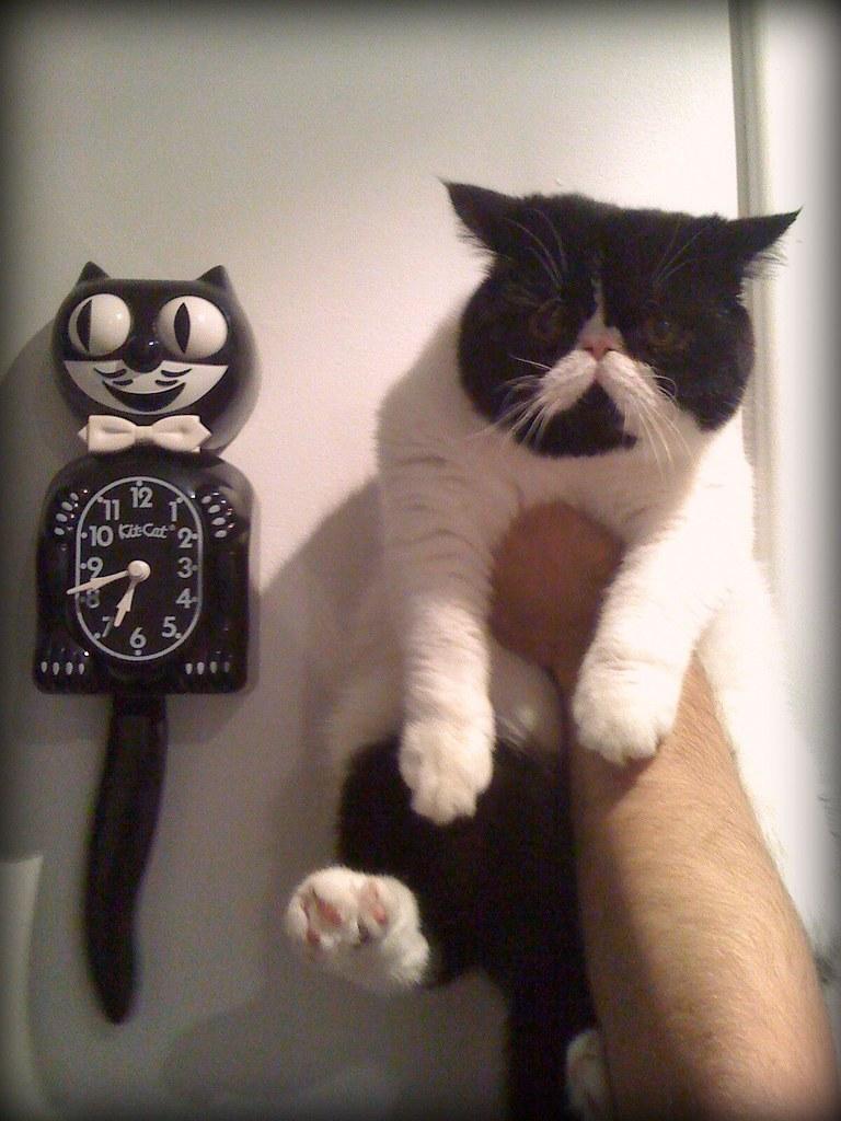 kit cat clock x2 my highly anticipated kit cat clock arriv flickr. Black Bedroom Furniture Sets. Home Design Ideas