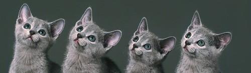 Kitten will eventually conquer the InterWebz