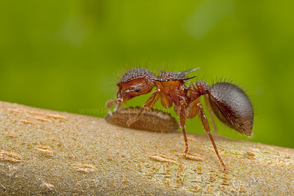 Cute Ant Logo an Cute Ant