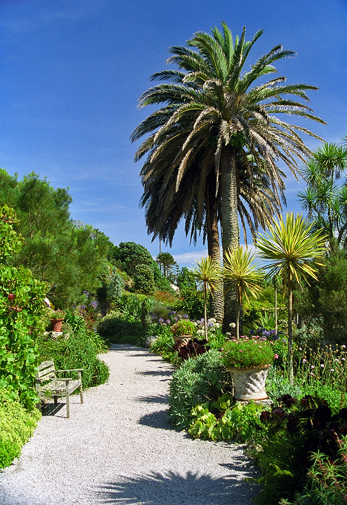 Tresco abbey gardens scilly isles uk palm tree lined p for Garden trees england