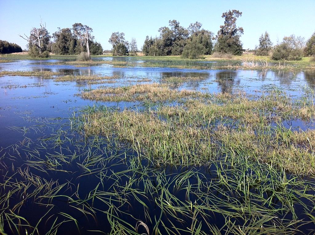 Freshwater Wetland, Hu...