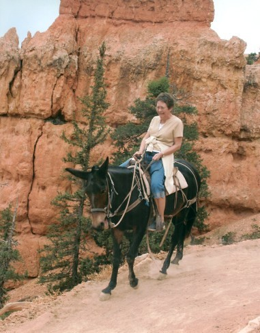 Travel Mule Ride Grant Canyon Austin American Stateman