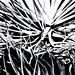cacti 2tq (cropped) -b&w