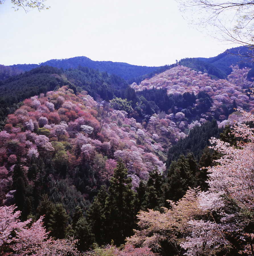 One Of The Most Beautiful Places In Japan Mt Yoshino I Flickr