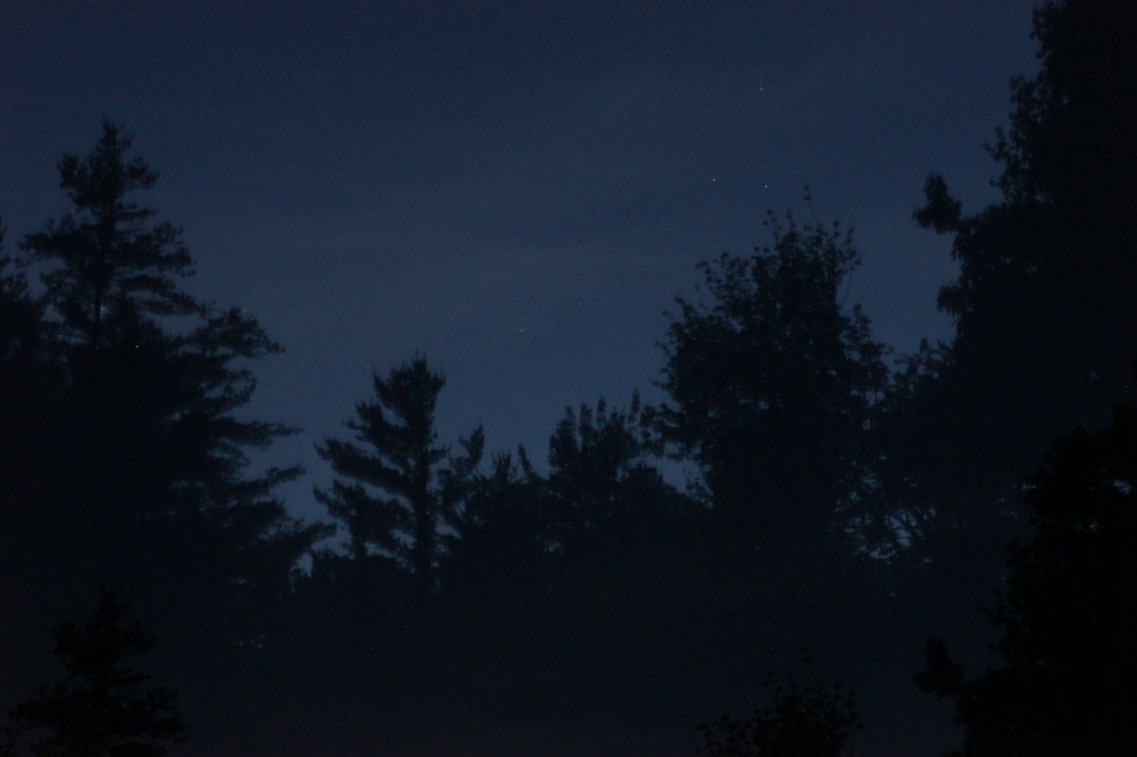 Maine Forest Night Tim...