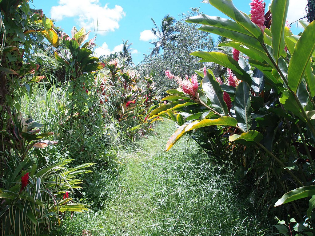 Flower Tunnel Teuila Tunnel The Teuila Is The National Flower Of Samoa