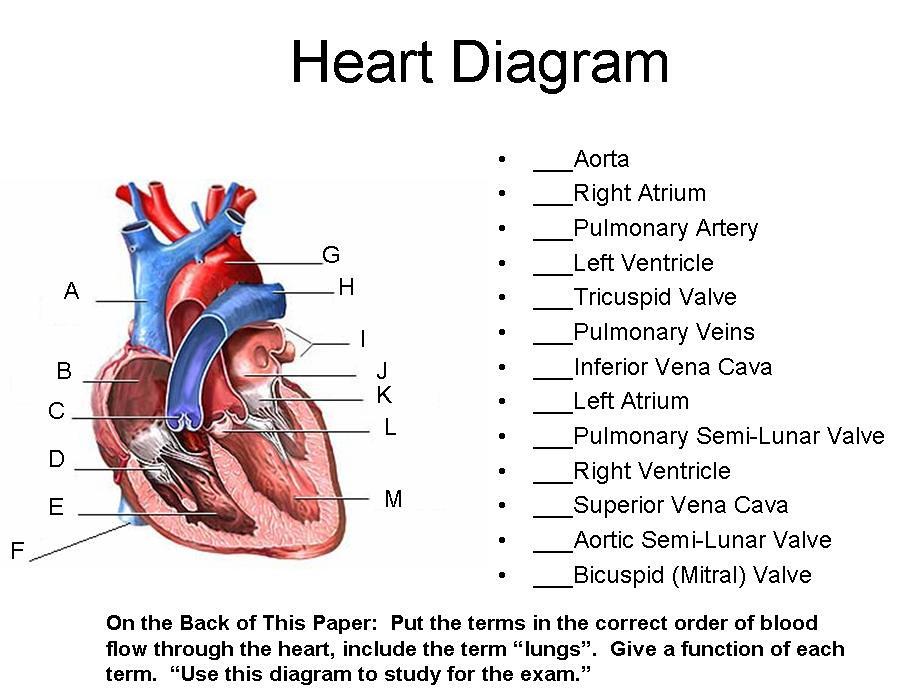Heart Diagram Timothyakeller Flickr