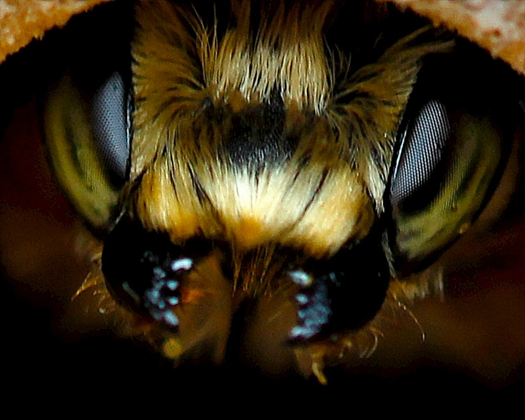 Image Result For Bee Parts Of