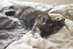 lexi cat nap