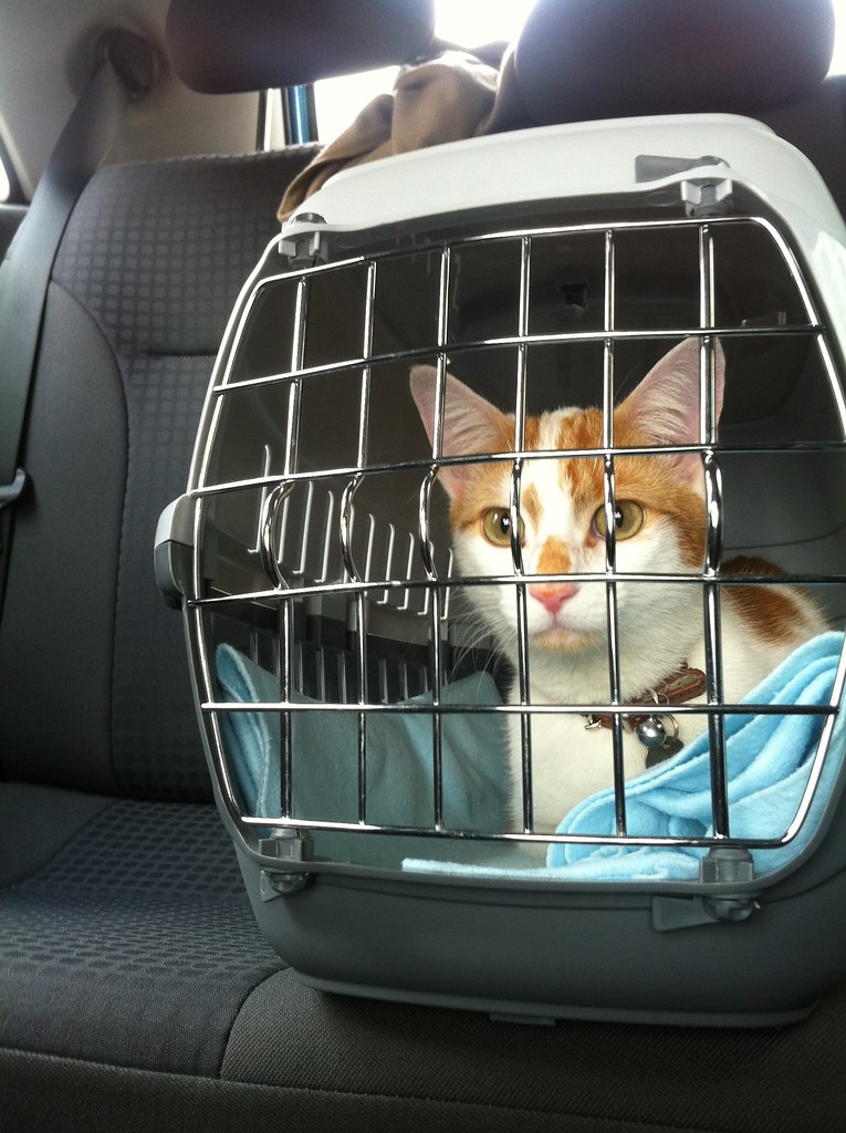Long Car Travel With Cats