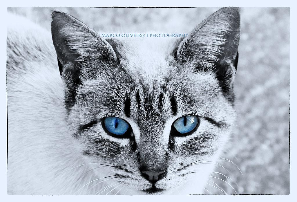 Blue Cat Eyes Tumblt