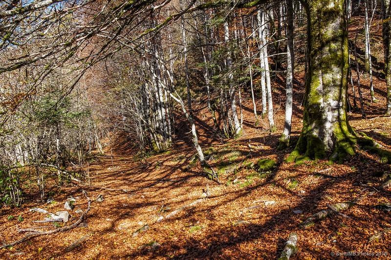 Buscando caminos por el bosque