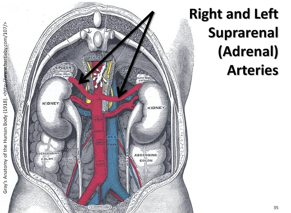 Forum on this topic: How to Study Anatomy, how-to-study-anatomy/