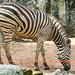 Dusit Zoo, Bangkok 841 10