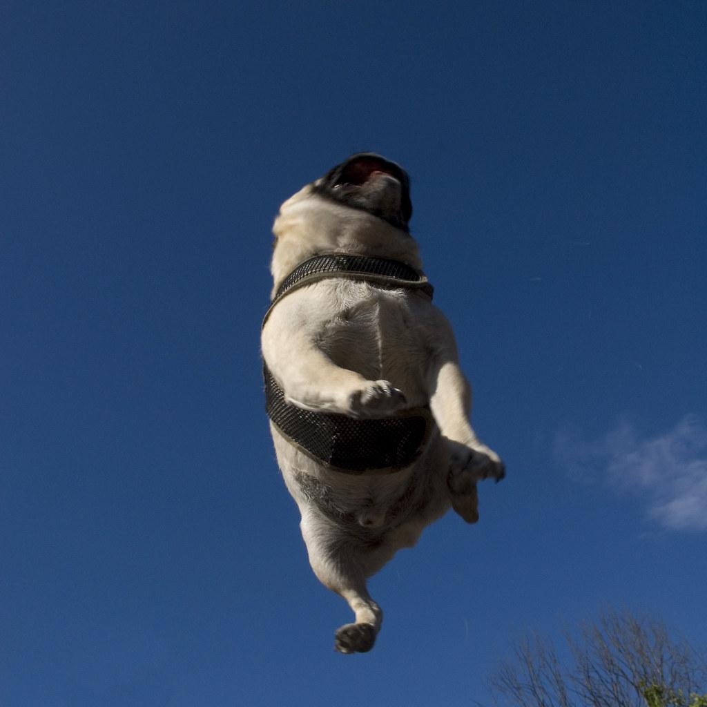Funny Dog Park Videos
