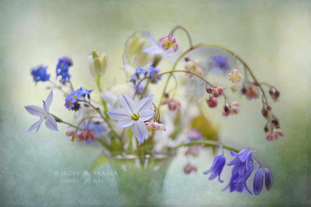 Photograph Spring Treasures by Jacky Parker