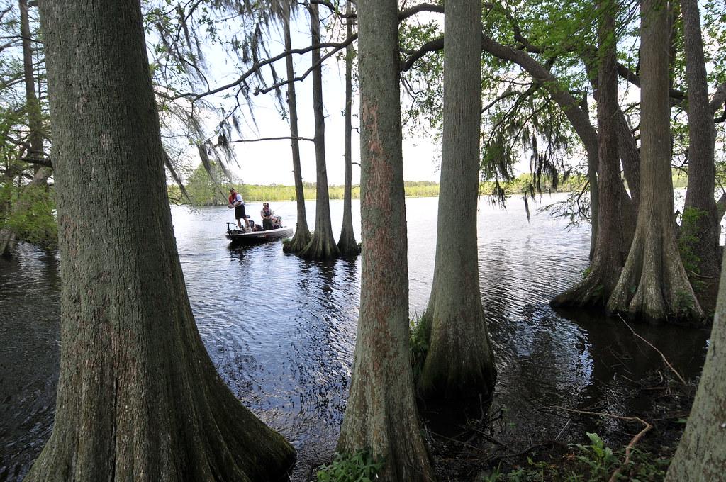 Fishing On Lake Talquin Cypress Trees Photo Tim