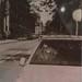 Tiger in a Cadillac