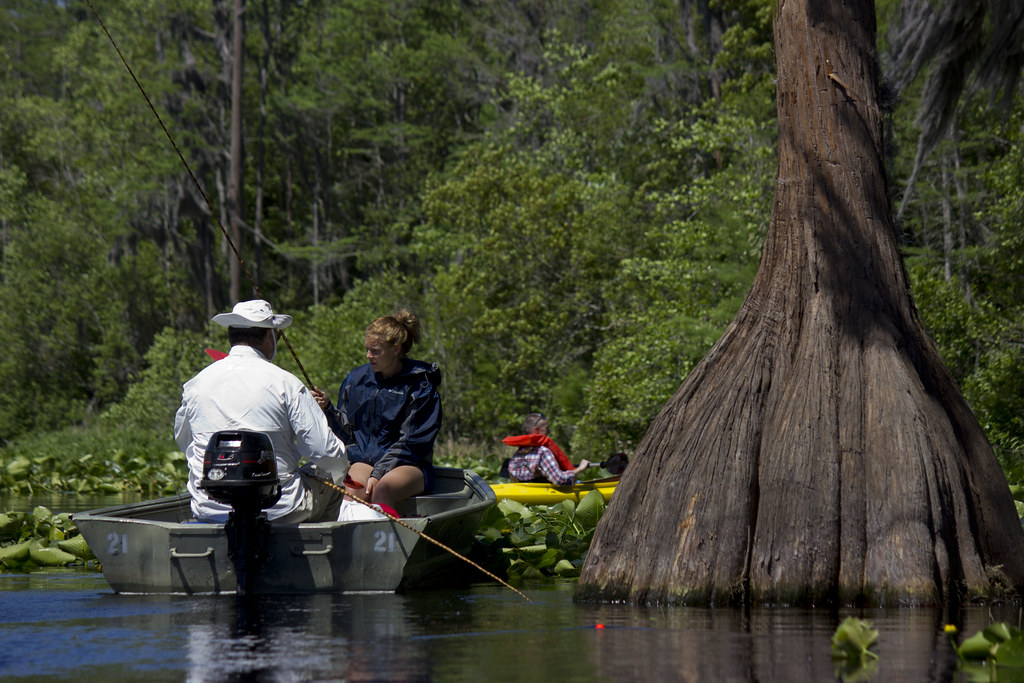 essay on okefenokee swamp Okefenokee swamp passage ap-lang 11th grade - encyclopedia essay example in the first passage, the okefenokee swamp is described with a wide variety of diction - okefenokee swamp passage ap-lang 11th grade introduction.