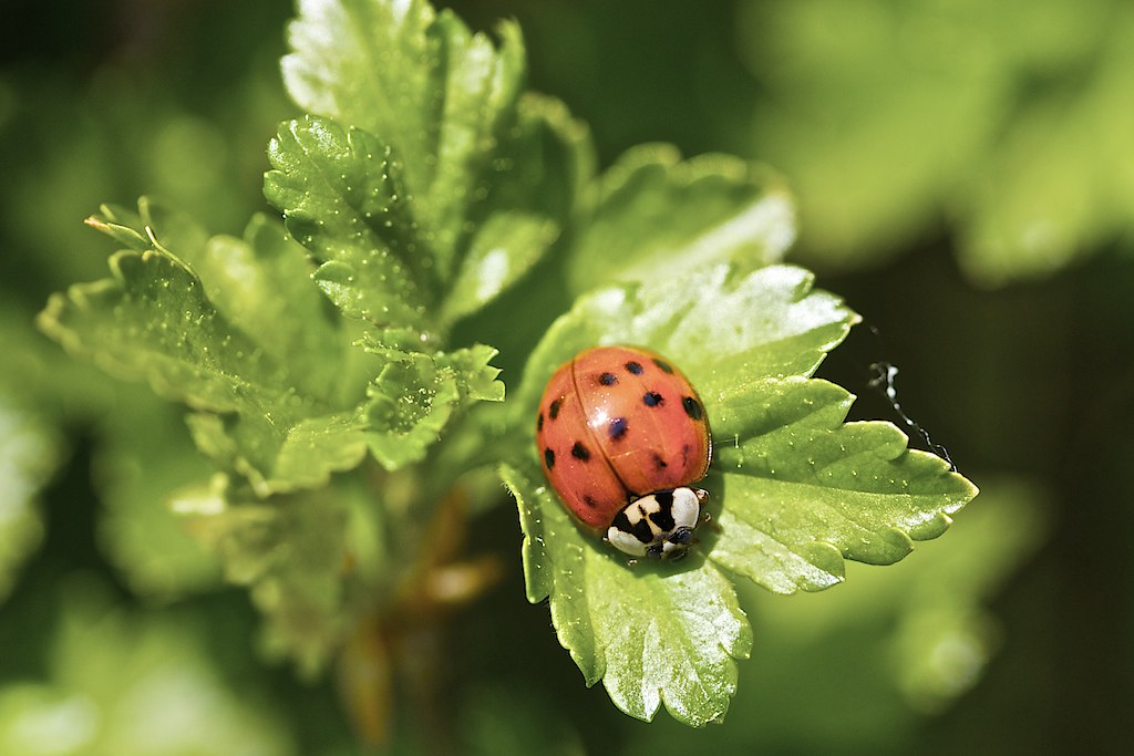Asian ladybug video likely. Most