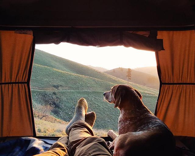 dog-traveling-car-motorcycle-maddie-on-road-3