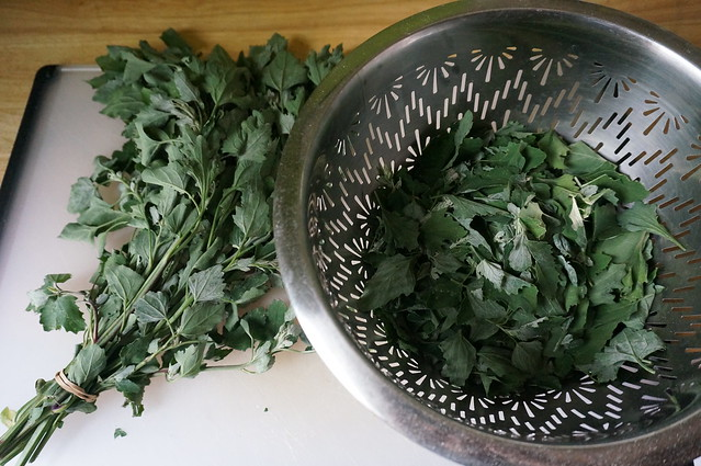 Lambsquarters on the stem and in the colander