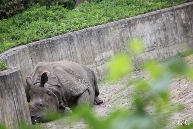 Tierpark Friedrichsfelde 10.05.201526