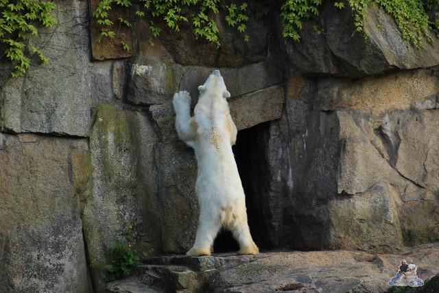 Zoo Berlin 19.05.2015  91