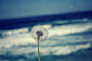 Dandelion Wish | by MILK-J4