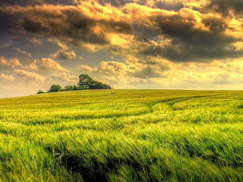 Just another wheat field | by Eric Goncalves