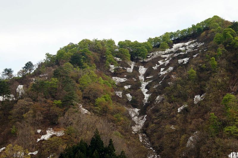 残雪と新緑 #2_201504_NO1