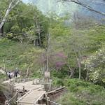 桧洞丸(ひのきぼらまる)
