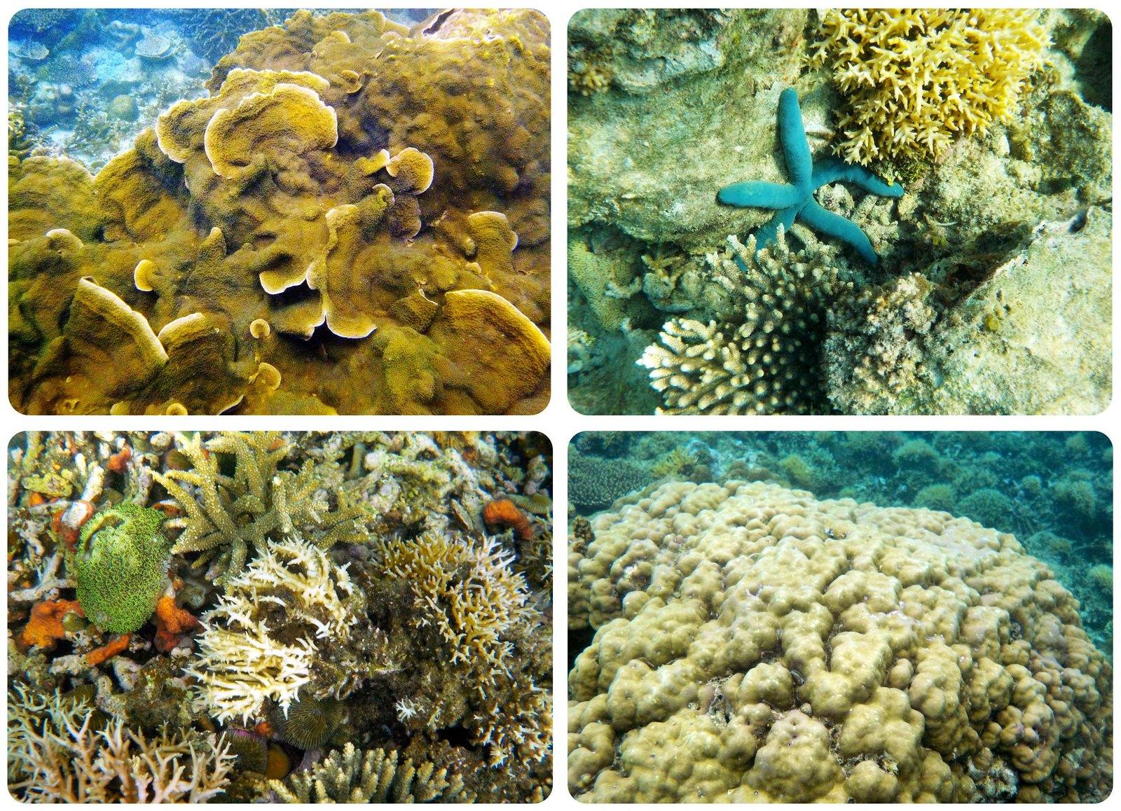 El Nido Philippines underwater