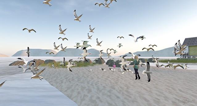 Rising Gulls