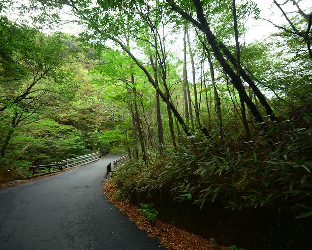 Bosques de bambú de Hakone