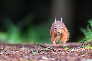 Hop, skip and jump | by Oliver C Wright