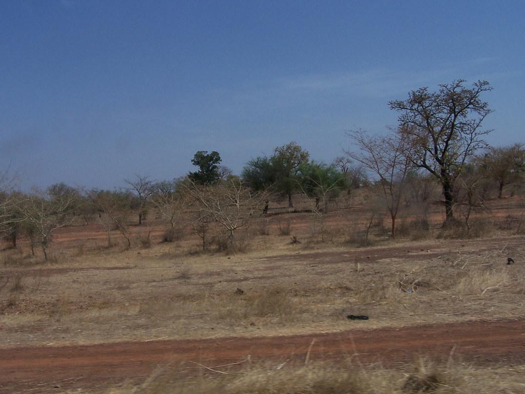 Sol pauvre au Burkina Faso (© International Institute of Tropical Agriculture)