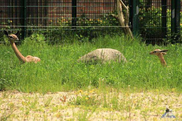 Tierpark Berlin 09.05.2015  116