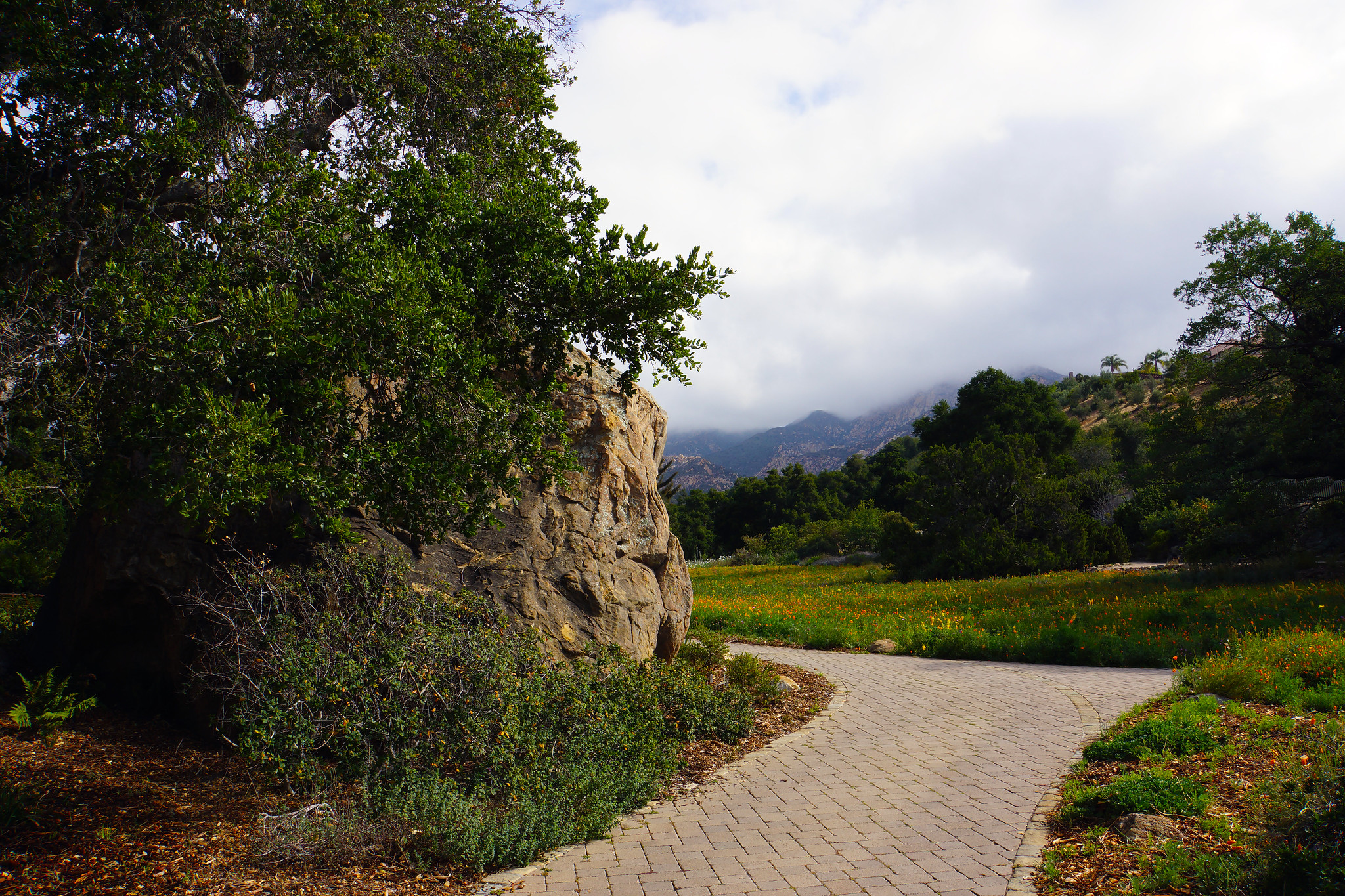 20150518_aa Meadow Path